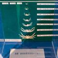 写真: タカアシガニの稚仔の成長標本