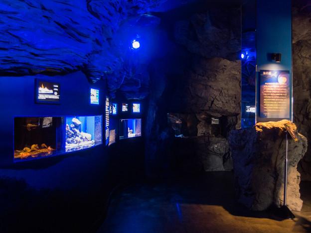 海の底・浅い海 深い海の水槽