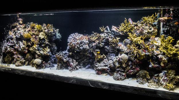 浅い海のサンゴ