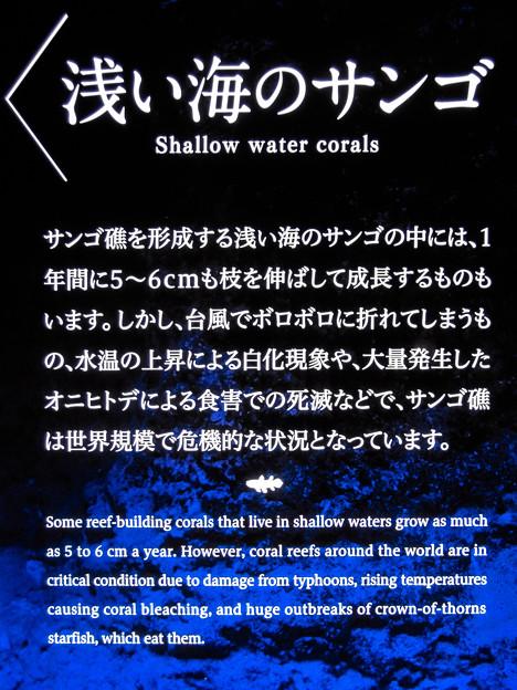 浅い海のサンゴの説明板