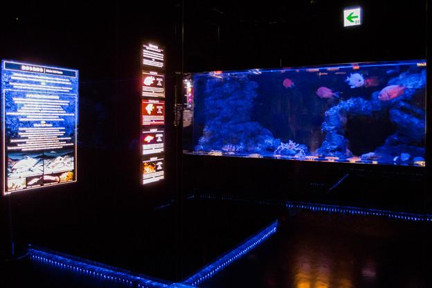深海の世界の水槽