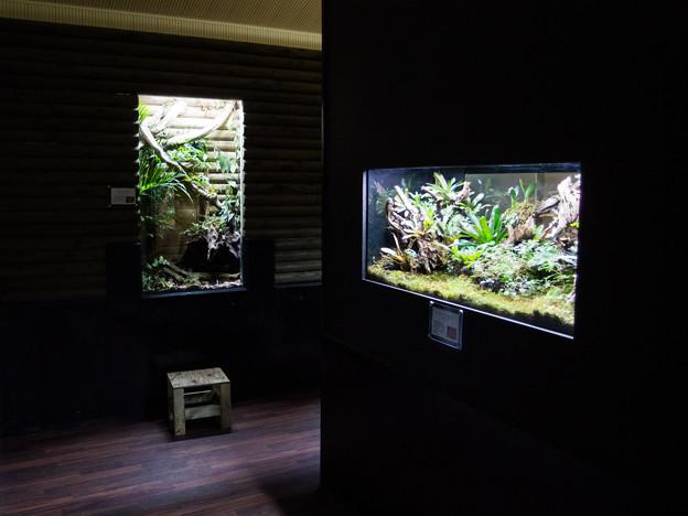 体感型カエル館 KawaZoo