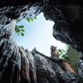 Photos: ミズナラの巨木の空洞