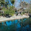 Photos: ハクチョウデッキの池