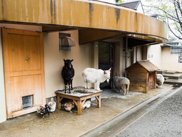 雨宿りする家畜
