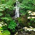 天子の七滝 清涼の滝