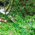天子の七滝 丸渕の滝