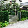 Photos: 長興寺裏 白隠の道