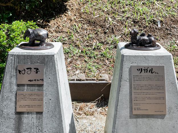 はま子とツガルの銅像
