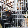 Photos: チンパンジー一家