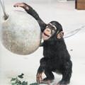 チンパンジーのコウタロウ