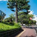 Photos: 横浜市中央図書館のオブジェ