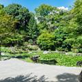 野毛山公園 トイレ前の池
