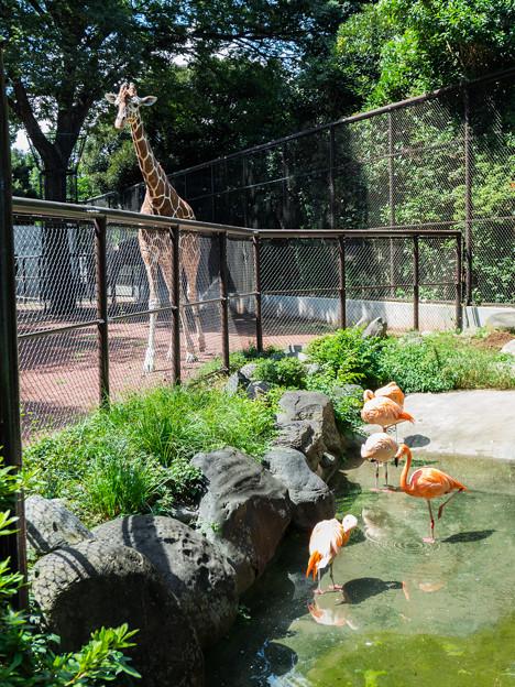 キリンとフラミンゴ