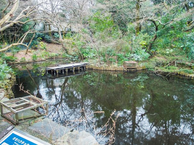 野毛山動物園 大池