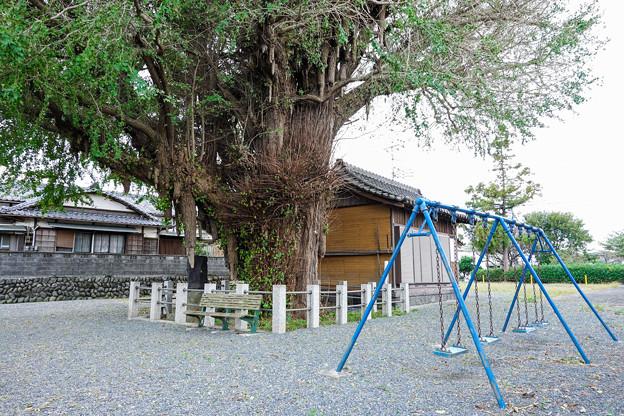 富士岡地蔵堂の大銀杏