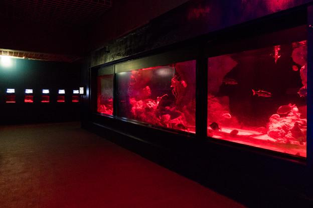 DON底 深海大水槽