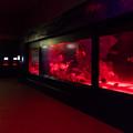 Photos: DON底 深海大水槽