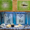 Photos: 上皇陛下のご研究 ヌマチチブ