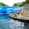 Photos: 自然動物園 アシカプール