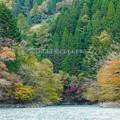Photos: 井川湖から眺める夢の吊橋