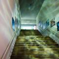 Photos: 入場ゲートの先にある階段