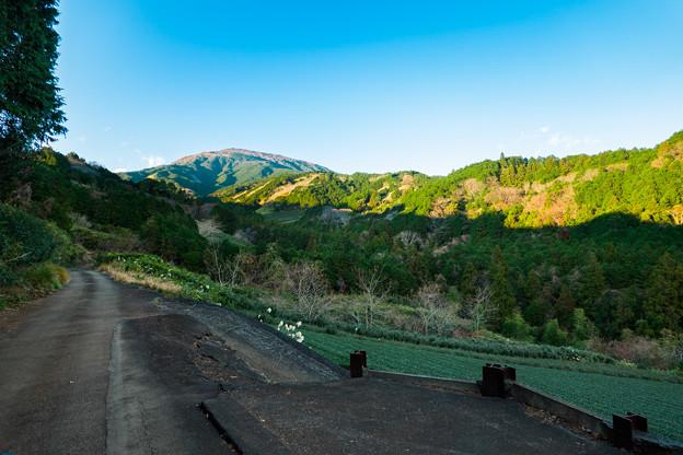 愛鷹山へ続く道