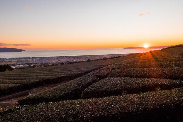 茶畑の向こうに沈む夕日