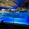 Photos: 屋内開放プール型水槽