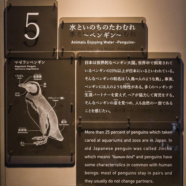 水といのちのたわむれ~ペンギン~