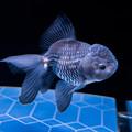 Photos: 青文魚