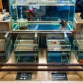 Photos: 東京金魚屋台 すみだ号