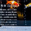 Photos: 和金(三つ尾、四つ尾、更紗)