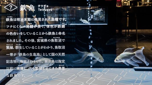 Photos: 鉄魚