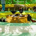 Photos: ふれあいコーナーに放たれた動物