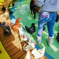 Photos: ふれあいコーナーに放たれたニワトリ