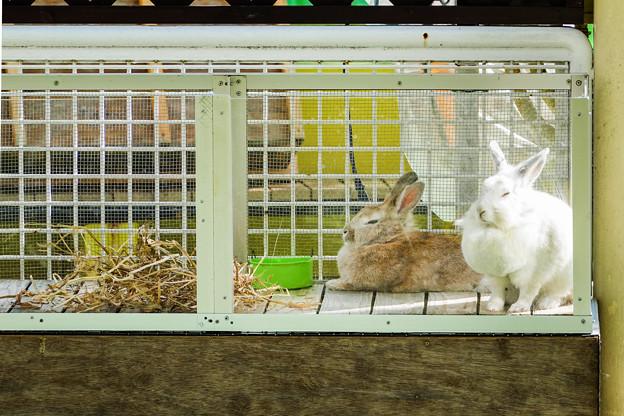 ケースの中のウサギ