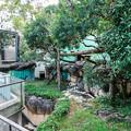 Photos: レッサーパンダの飼育場