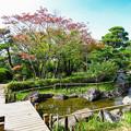 Photos: 菖蒲田