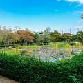 Photos: 水草の池