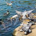 Photos: 主池の生き物たち
