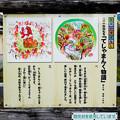 Photos: てしゃまんく物語 1、2