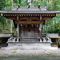 井川神社 本殿