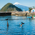Photos: イルカの海のイルカショー