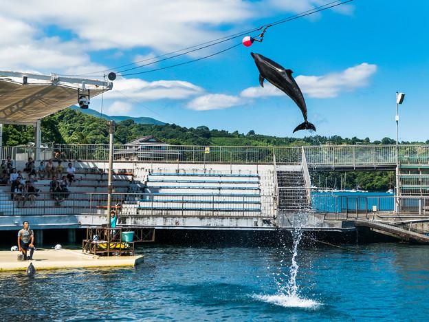 イルカの海のイルカショー