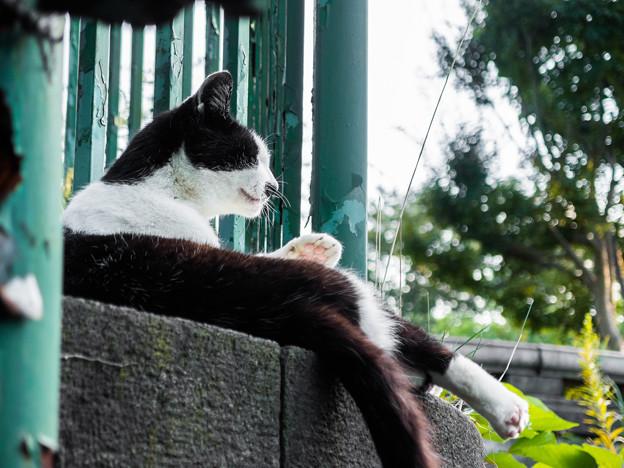 野毛山公園の猫