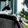 Photos: 野毛山公園の猫