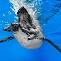 Photos: ペンギンのお尻