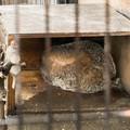 Photos: 丸まるハクビシン