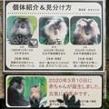 Photos: シシオザルの説明板